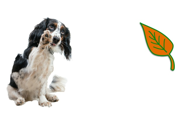 dog-essentials-paws