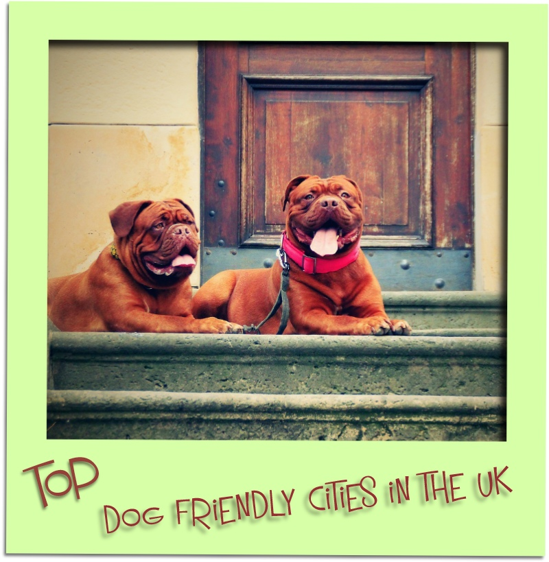 dog friendly cities grid