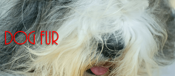 3 Simple Tips To Cleaning Up Dog Fur