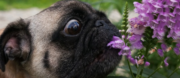 22 Plants That Could Poison Your Dog This Spring