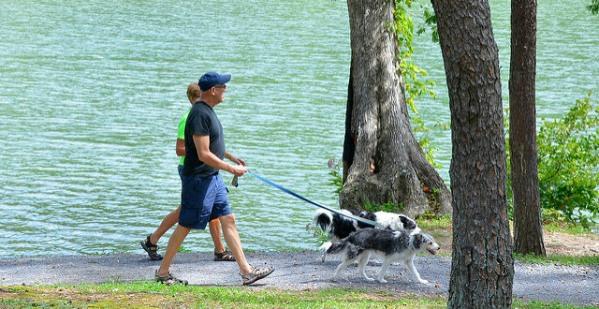 Pet Entertained walk