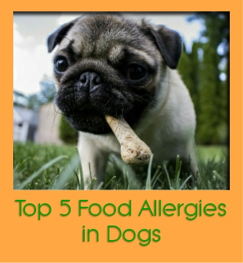 allergies in dogs gd