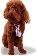 doggie day wear ties