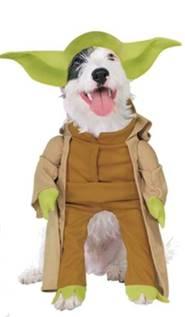 doggy day wear ears