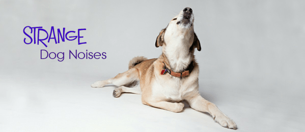 Strange Dog Noises – What Does That Mean!