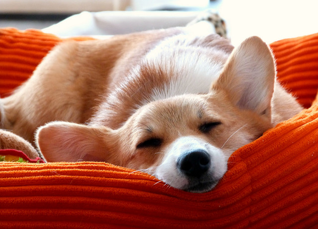 travelling with your dog bed