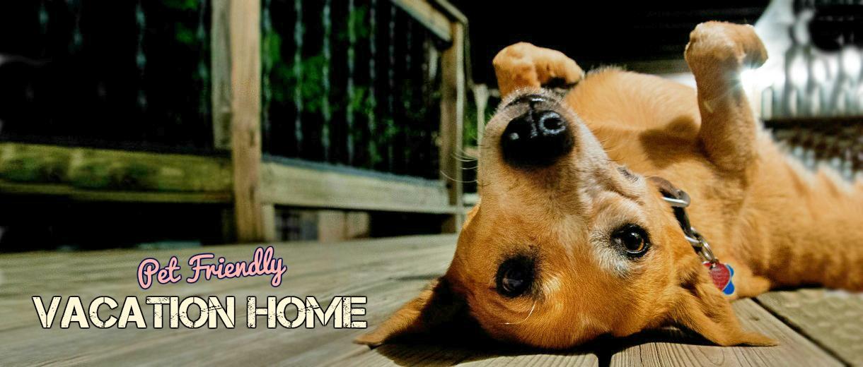 Wag the dog uk - Make house pet friendly ...