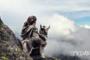 Siberian Huskies cover