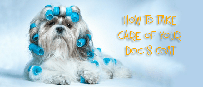 How To Take Care Of Your Dog's Coat
