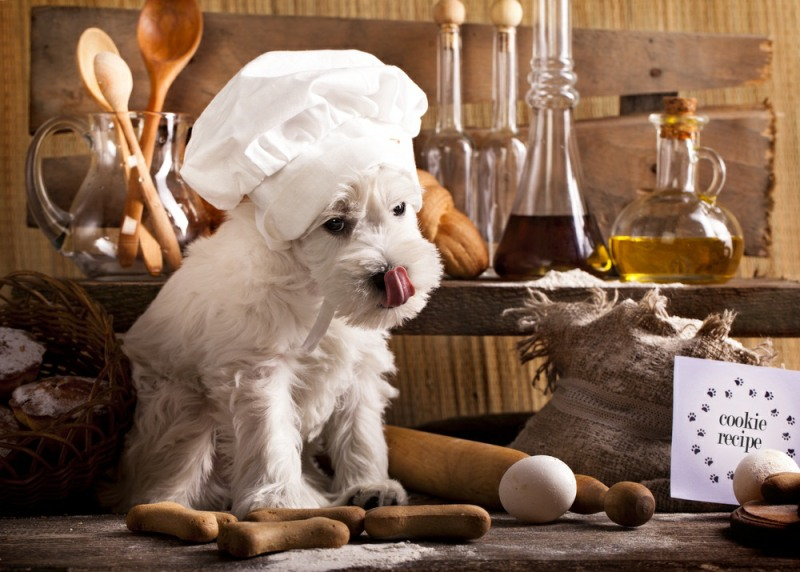 dog coat eating