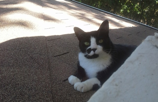 Jack on the porch roof as he heard me singing to him from inside