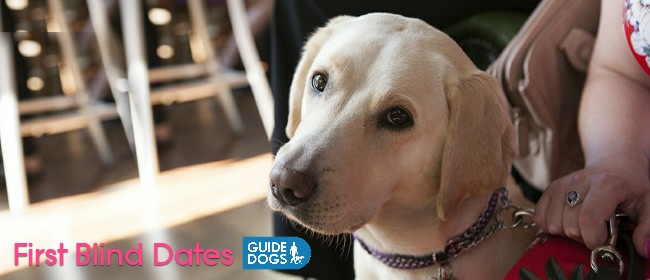 guide dog cover