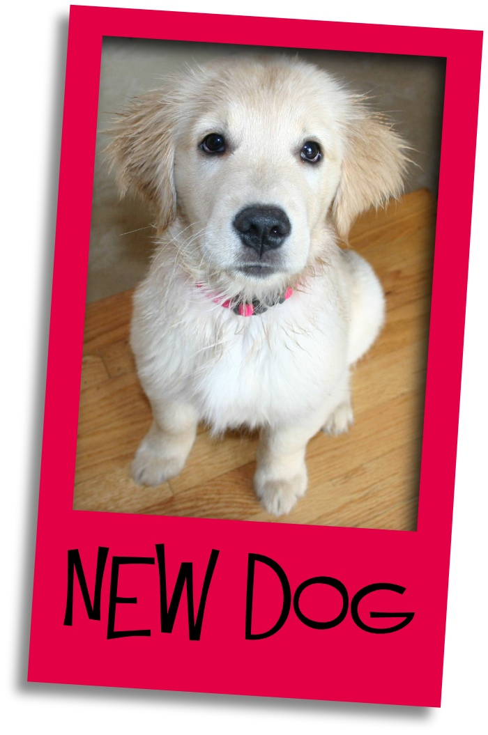 new dog grid