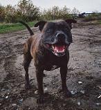 clean up dog mud