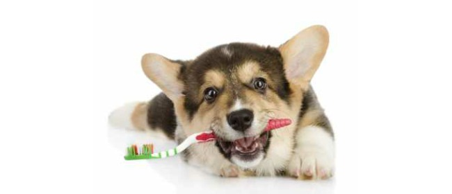 Dental Hygiene for Dogs