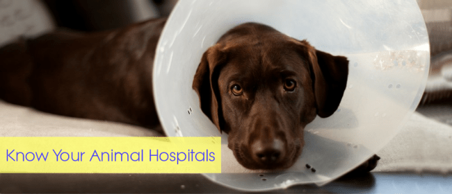 animal hospitals cover