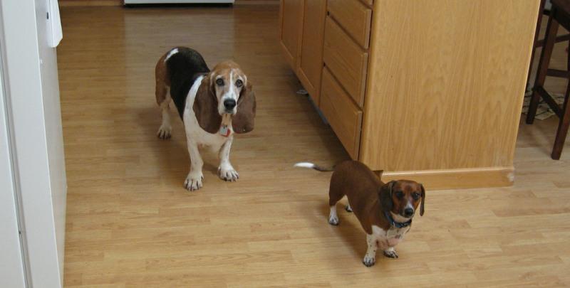homemade dog food kitchen