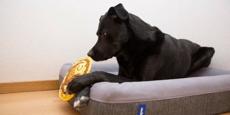 your pooch toy
