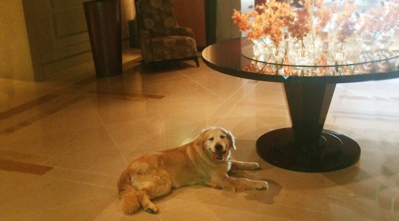 pet friendly hotels umstead