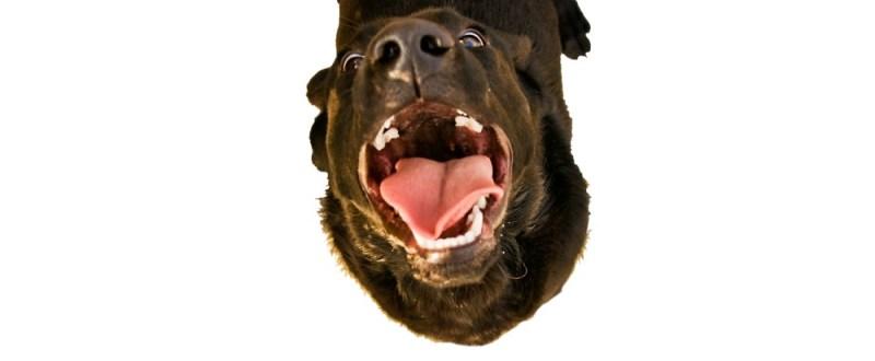 dog's teeth smile