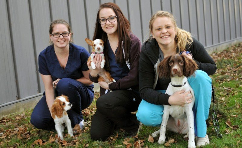 Rescue Shelter vets