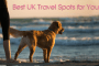 dog friendly accommodation cover