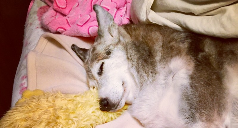 sound asleep with duckie toy