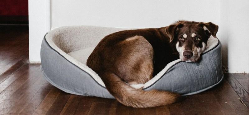 dog bed sleeping