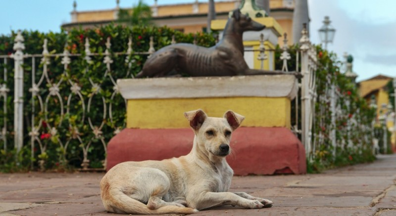 dog-friendly cuba visit