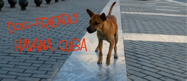 dog friendly cuba