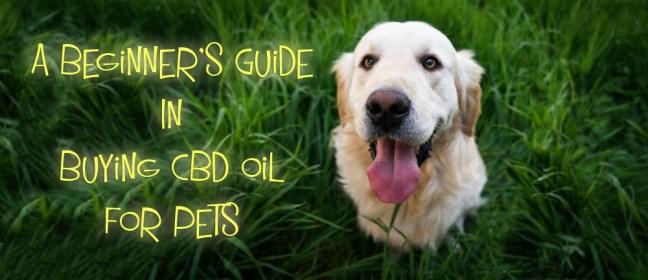 cbd oil for pets gr