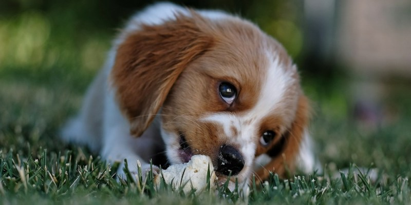 Nutrition for dogs online
