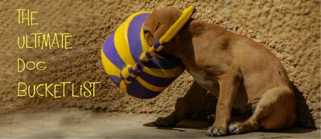 dog bucket list cover