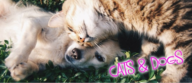 cats and dogs cover