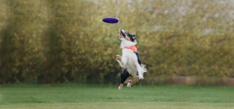Aussie dog toys Frisbee