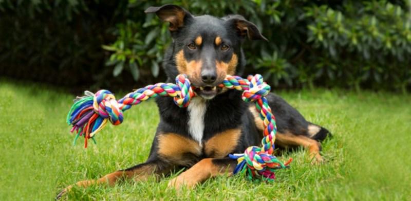 Aussie dog toys tie rope