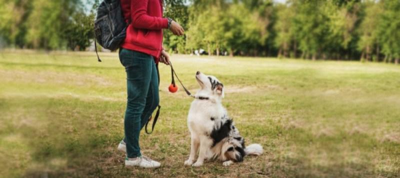 aussie dog toys training