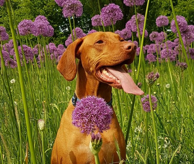 dog-friendly flowers