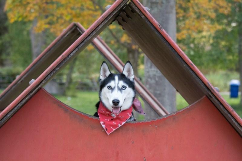 dog-friendly garden house