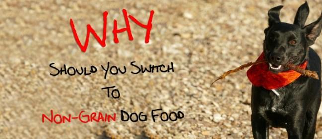 non-grain dog food cover
