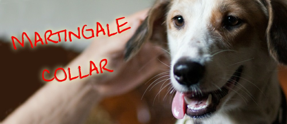 Martingale collars are the best dog collars - Wag The Dog UK
