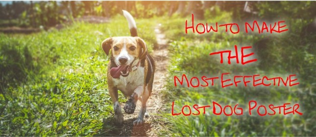 lost dog cover