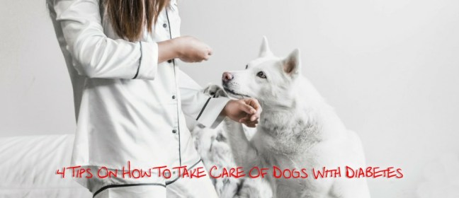 Dogs With Diabetes cover