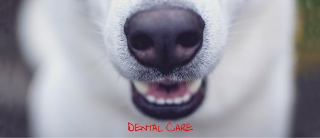 dental care cover