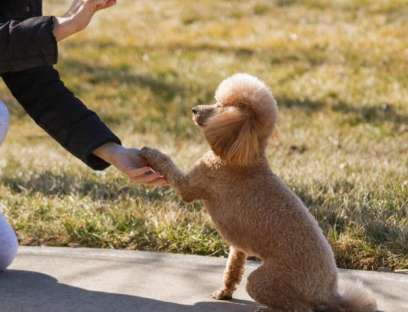 Dog Trick Training paw