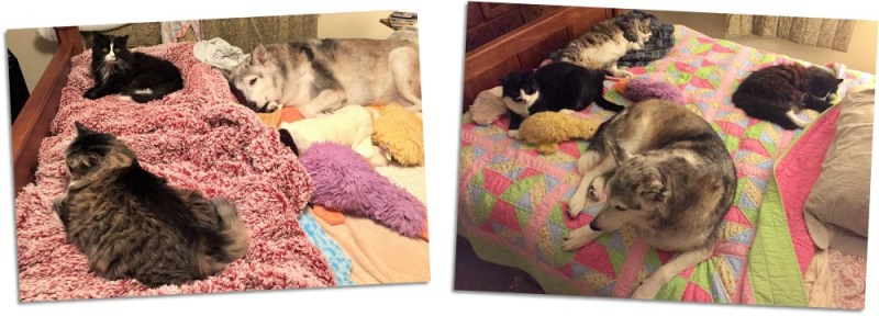 all yoga pets on bed