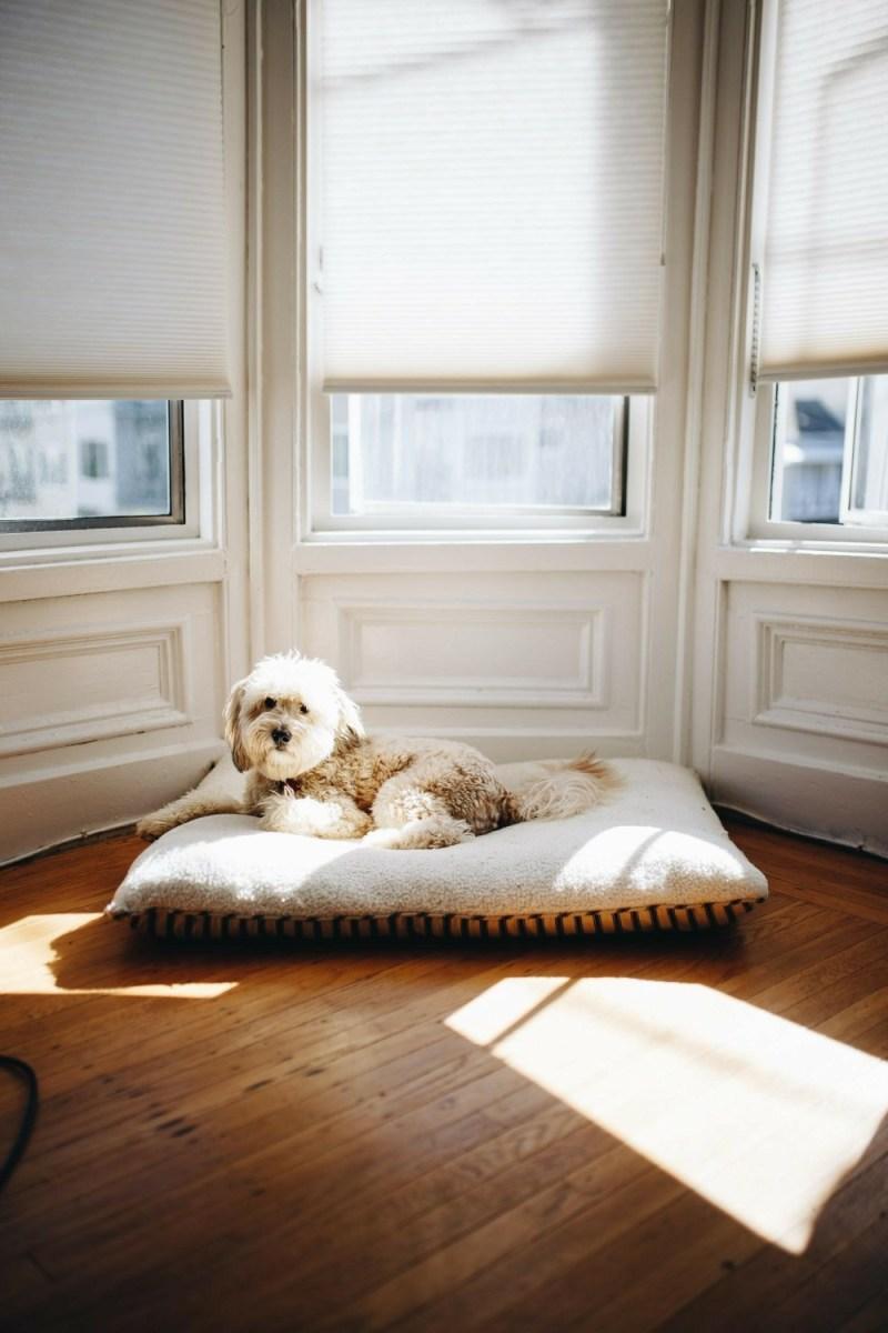 zoner photo dog