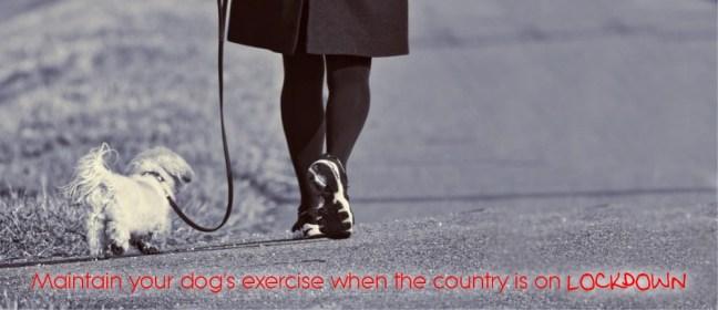 dog exercise lockdown cover