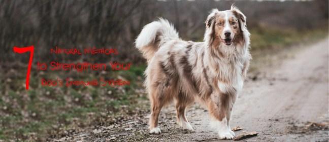 dog's immune system cover