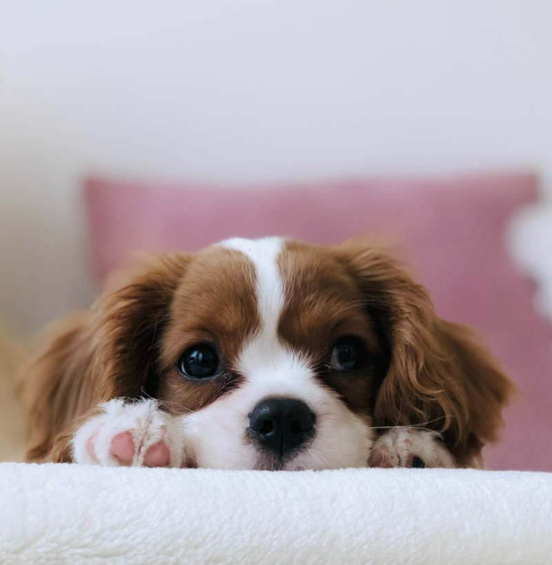 Structure and Routine for puppies